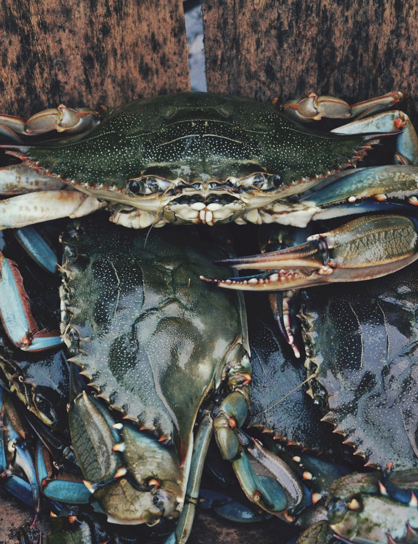 crabs-tall